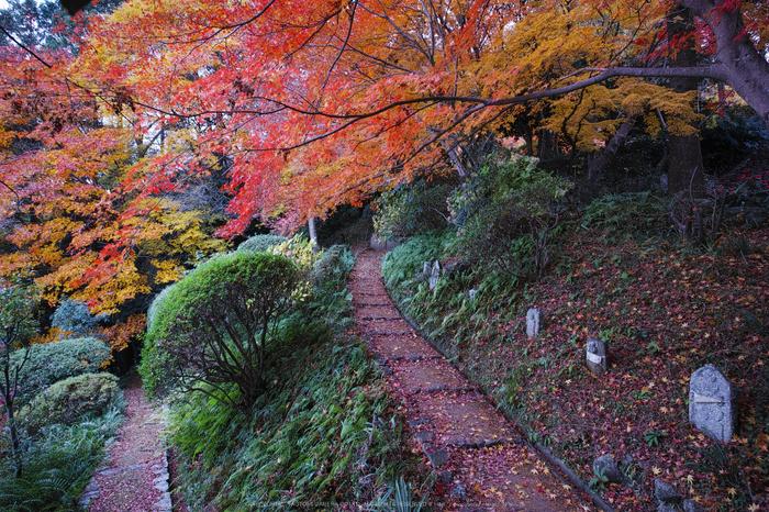 九品寺,紅葉(DP0Q0459,14 mm,F5.6)2015yaotomi_.jpg