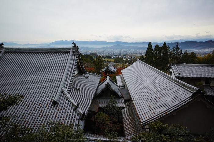九品寺,紅葉(DP0Q0473,14 mm,F5.6)2015yaotomi_.jpg