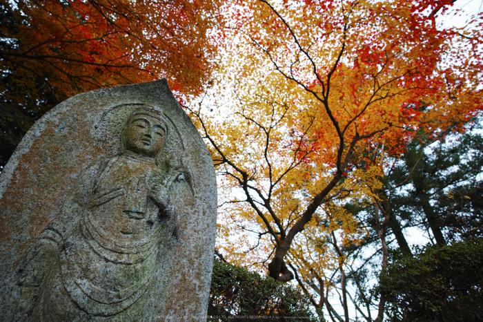 九品寺,紅葉(DP0Q0483,14 mm,F5.6)2015yaotomi_.jpg