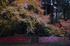 九品寺,紅葉(DP2Q0128f,30 mm,F8)2015yaotomi_.jpg