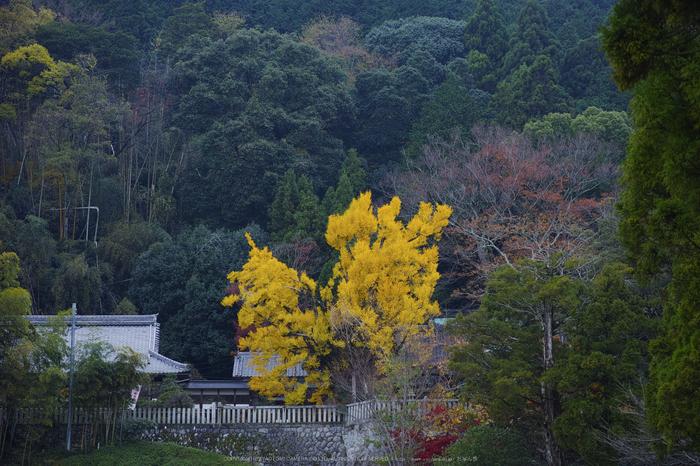 九品寺,紅葉(DP3Q1353,50 mm,F4)2015yaotomi_.jpg