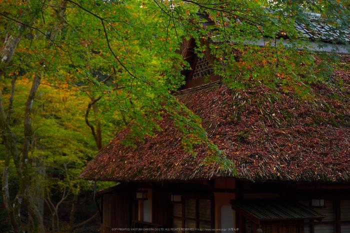 奈良公園,東大寺,紅葉(PB250012,34 mm,F2.8,iso200)2015yaotomi_.jpg