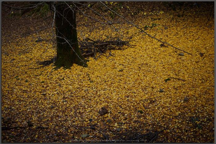 奈良公園,東大寺,紅葉(PB250053,40-mm,F2.8,iso200)2015yaotomi_T.jpg
