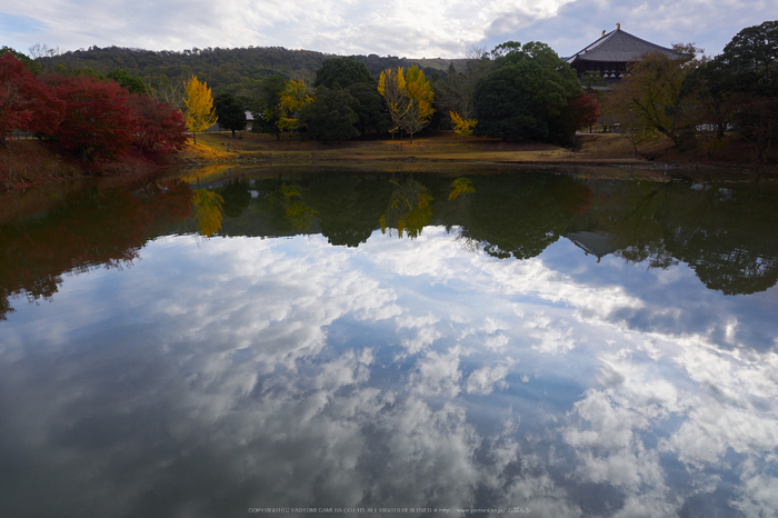 奈良公園,東大寺,紅葉(PB250099,12 mm,F7.1,iso200)2015yaotomi_.jpg
