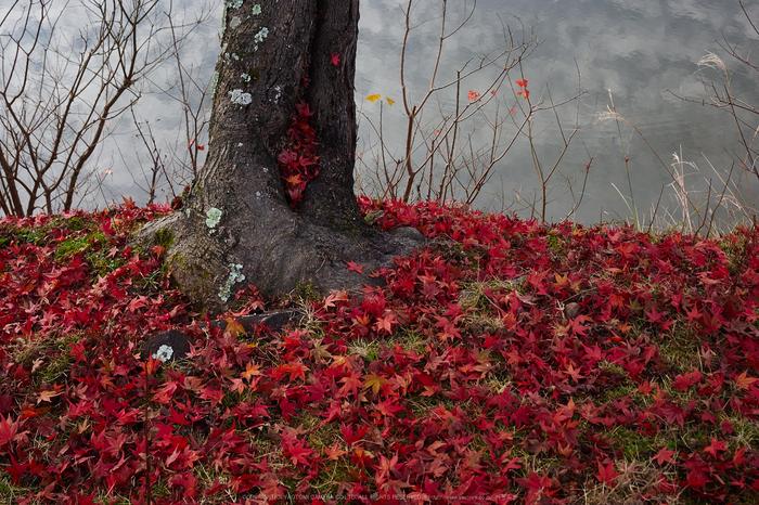 奈良公園,東大寺,紅葉(PB250121,25 mm,F7.1,iso200)2015yaotomi_.jpg