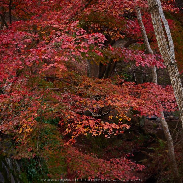 奈良公園,東大寺,紅葉(PB250185,40 mm,F3.5,iso200)2015yaotomi.jpg