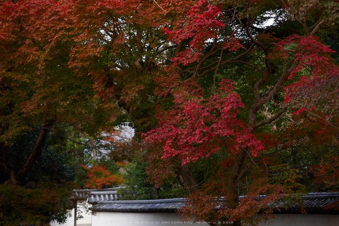 奈良公園,東大寺,紅葉(PB250216,40 mm,F3.2,iso200)2015yaotomi.jpg