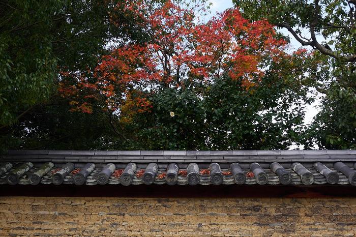 奈良公園,東大寺,紅葉(PB250223,20 mm,F5.6,iso200)2015yaotomi.jpg