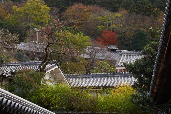 奈良公園,東大寺,紅葉(PB250225,40 mm,F6.3,iso200)2015yaotomi.jpg