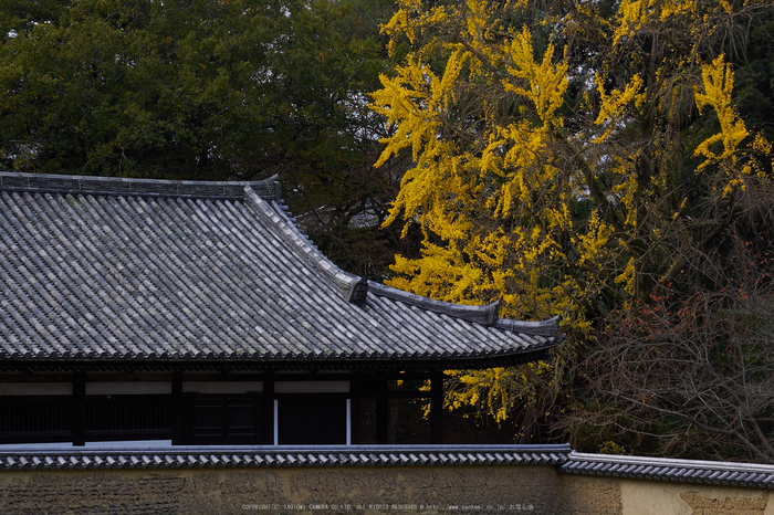 奈良公園,東大寺,紅葉(PB250228,40 mm,F6.3,iso200)2015yaotomi.jpg