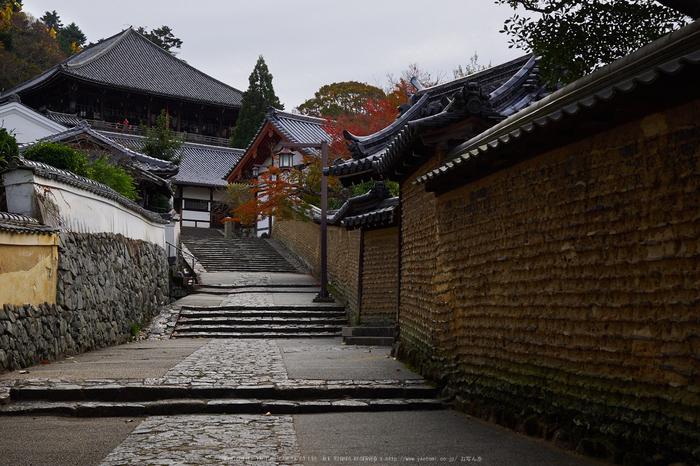 奈良公園,東大寺,紅葉(PB250229,26 mm,F6.3,iso200)2015yaotomi.jpg