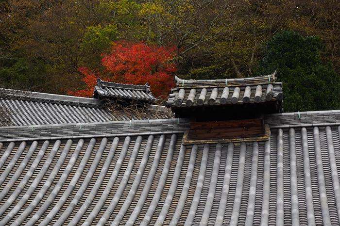 奈良公園,東大寺,紅葉(PB250236,40 mm,F6.3,iso200)2015yaotomi.jpg