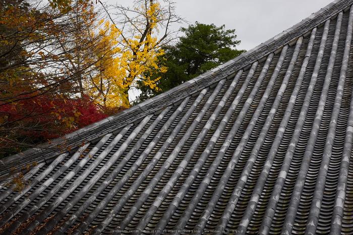 奈良公園,東大寺,紅葉(PB250248,34 mm,F7.1,iso200)2015yaotomi.jpg