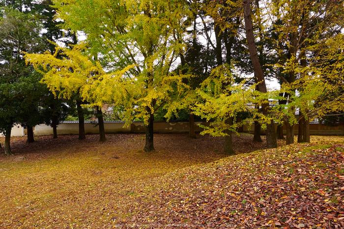奈良公園,東大寺,紅葉(PB250347,12 mm,F6.3,iso200)2015yaotomi.jpg