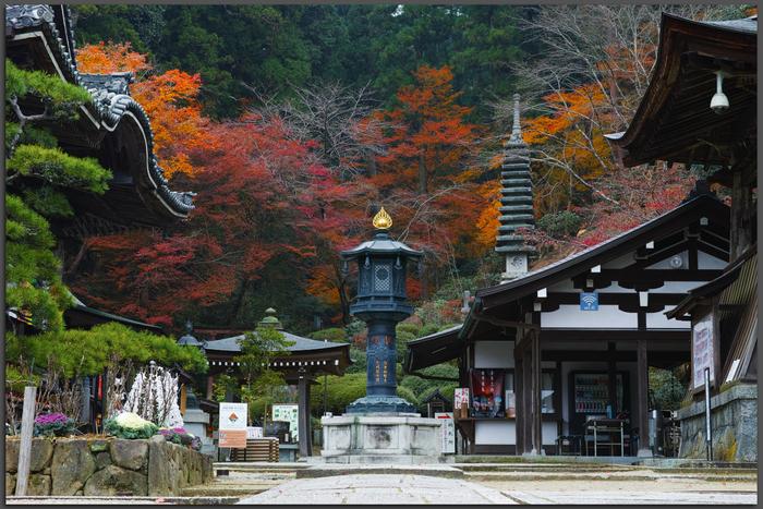 明日香,岡寺,紅葉(DP3Q1378,50-mm,F7.1,20151206yaotomi_T.jpg