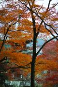 明日香,岡寺,紅葉(DP3Q1404bf,50 mm,F3.5,20151206yaotomi.jpg