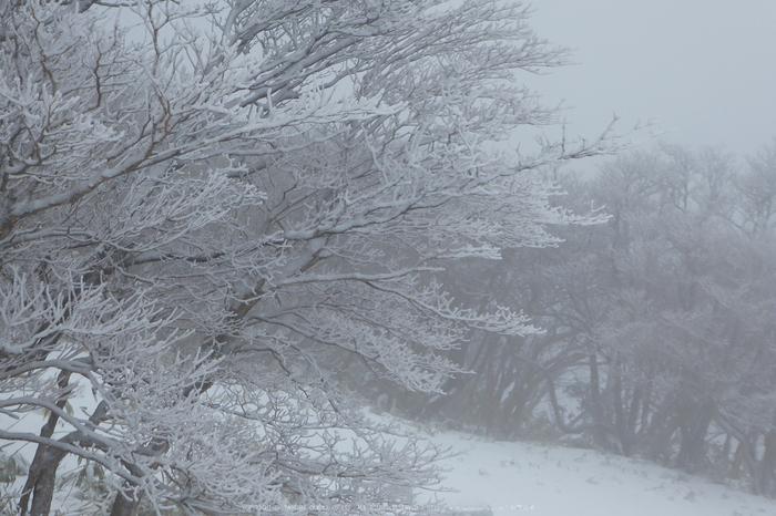 御在所岳,雪景(P1000317(RAW),13 mm,F4.6)2016yaotomi.jpg