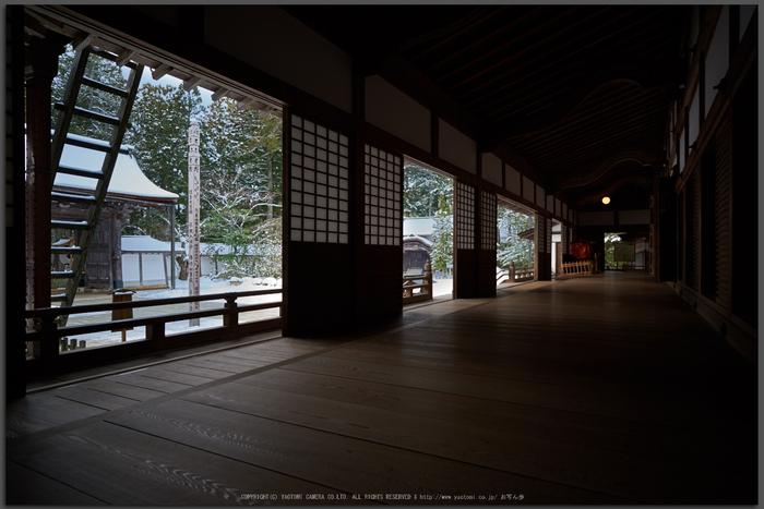 Milvus,高野山(D81_9253,21-mm,F2.8)2016yaotomi_T.jpg