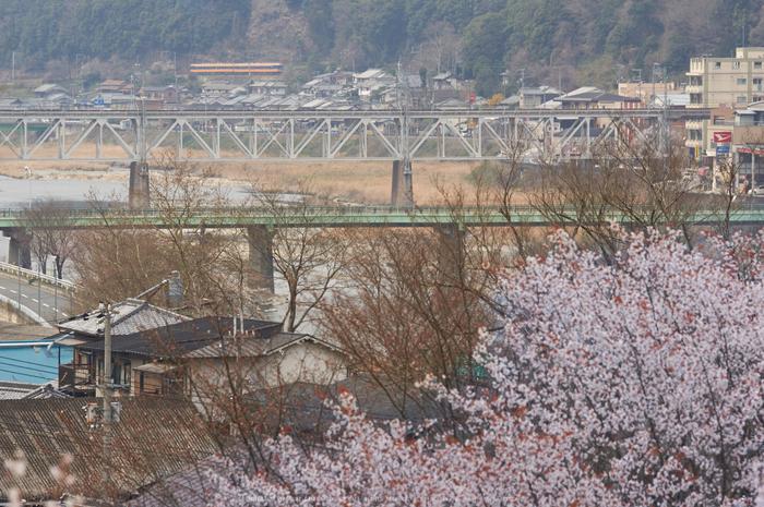 吉野本善寺,桜(K32_7229,200 mm,F7.1,iso100)2016yaotomi.jpg