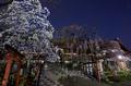 氷室神社,桜(EM130005)12 mm,F8,2 分 1 秒,iso200_2016yaotomi 1.jpg