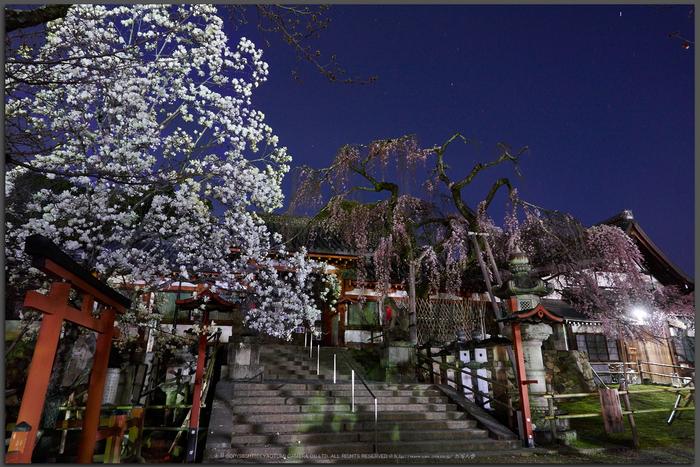 氷室神社,桜(EM130005)12-mm,F8,2-分-1-秒,iso200_2016yaotomi_T.jpg