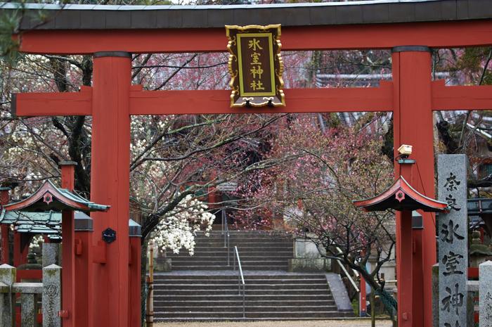 氷室神社,桜(K32_6302)88 mm,F2.8,1-100 秒,iso100_2016yaotomi.jpg