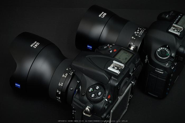 Milvus(DSC_0018,70 mm,F22)2016yaotomi.jpg