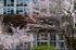 丹生小学校,桜(K32_7689f,70 mm,F6.3)2016yaotomi.jpg