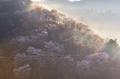 吉野山,桜,K32_8141fu,95 mm,F7.1_2016yaotomi.jpg