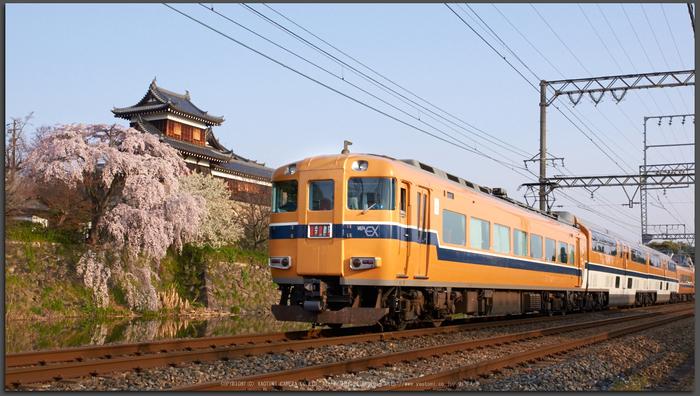 大和郡山城跡,桜(K32_6916,26-mm,F9)2016yaotomi_T.jpg