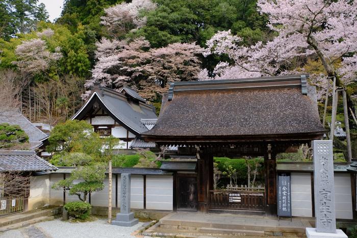 室生寺,桜(DSCF0165,22 mm,F7.1,iso200)2016yaotomi_.jpg