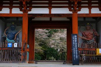 室生寺,桜(DSCF0179,38 mm,F8,iso200)2016yaotomi_.jpg