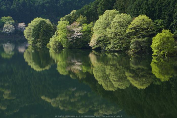 室生湖,新緑(P1000910,43 mm,F9,iso200)2016yaotomi_.jpg