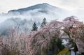 貝原,福西邸,桜(K32_7578F,43 mm,F10)2016yaotomi.jpg