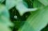 宇陀向淵,すずらん(EM180081fr,200 mm,F5)2016yaotomi_.jpg