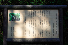 宇陀向淵,すずらん(EM180194,35 mm,F5.6)2016yaotomi_ 1.jpg