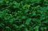宇陀向淵,すずらん(EM180239fr,182 mm,F5.6)2016yaotomi_.jpg