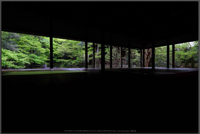 蓮華寺,新緑(DSCF0763,10-mm,F8)2016yaotomi_T.jpg