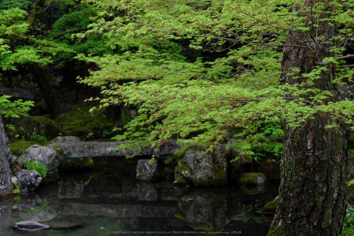 蓮華寺,新緑(DSCF0797,72 mm,F8)2016yaotomi.jpg