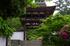 長岳寺,つつじ(EM170039fu,30 mm,F9)2016yaotomi_.jpg
