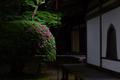 長岳寺,つつじ(EM170129fu,30 mm,F1.4)2016yaotomi_.jpg