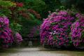長岳寺,つつじ(EM170153fu,30 mm,F1.4)2016yaotomi_.jpg
