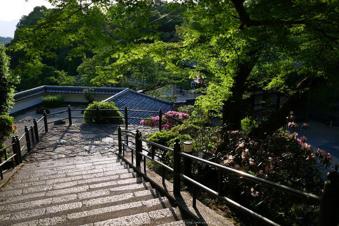 GX7MarkII,岡寺(P1000075,15 mm,F5.6)2016yaotomi.jpg