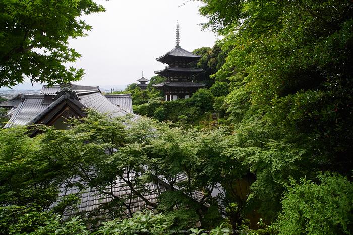 當麻寺西南院,サツキ_EM110144,2016yaotomi_.jpg