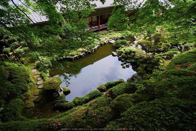 當麻寺西南院,サツキ_EM110174,2016yaotomi_ 1.jpg