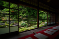 當麻寺西南院,サツキ_EM110268FL,2016yaotomi_.jpg