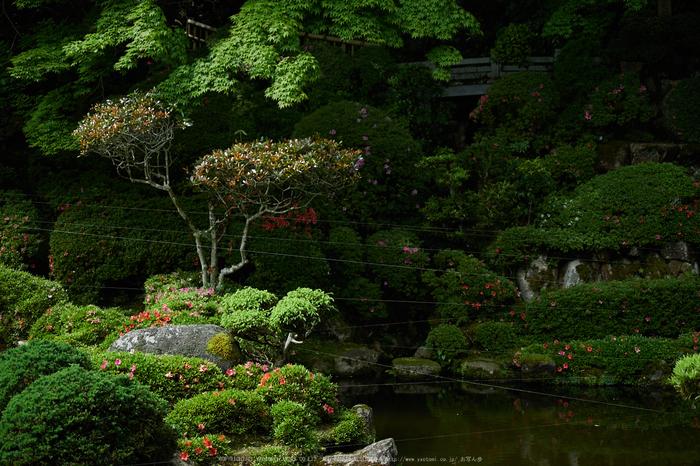 當麻寺西南院,サツキ_EM110285,2016yaotomi_.jpg