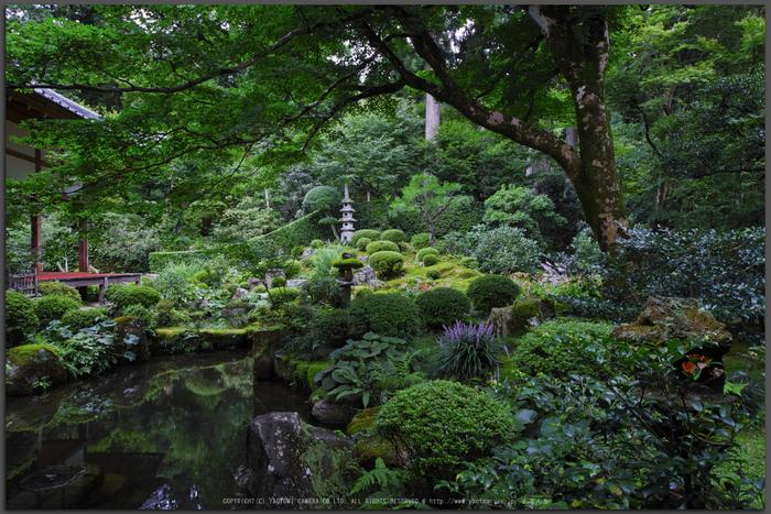 三千院,秋海棠(SDQ_2160,16-mm,F7.1)2016yaotomi_T.jpg
