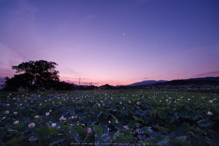藤原宮跡,蓮(SDQ_1014_1016G,8 mm,F8,1.3 秒)2016yaotomi_.jpg