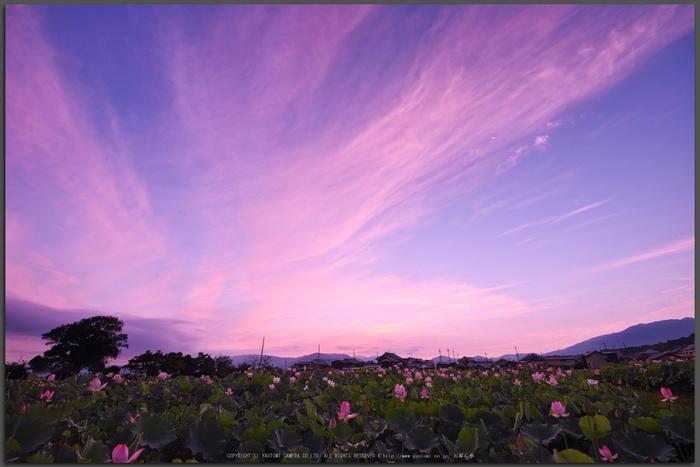 藤原宮跡,蓮(SDQ_1059_1063G,9-mm,F8,1-15-秒)2016yaotomi_T.jpg